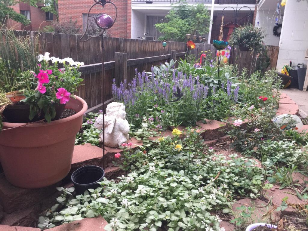 June Garden 7-13-17a